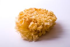 Tremella. On a white background Royalty Free Stock Images