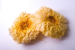 Tremella. On a white background Stock Images