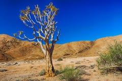 Tremer a árvore na frente dos montes áridos Imagens de Stock Royalty Free