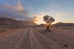 Tremer a árvore Sun Starburst Imagens de Stock Royalty Free