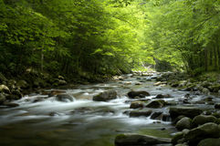 Tremont al parco nazionale di Great Smoky Mountains, TN U.S.A. Immagine Stock