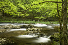 Tremont, Great Smoky Mtns NP, TN. River, Tremont, Great Smoky Mtns NP, TN stock photo