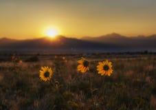 Trempage dans le soleil Image stock