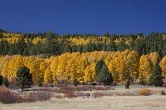 Tremule di autunno Immagine Stock Libera da Diritti