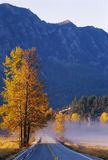 Tremule di autunno lungo la strada Fotografia Stock