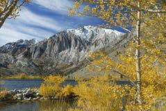 Tremule di autunno in un lago della montagna Immagini Stock Libere da Diritti