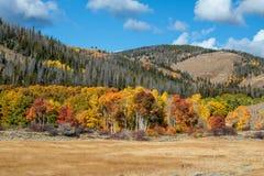 Tremule di caduta del Wyoming Fotografia Stock