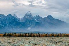 Tremule di caduta lungo un fiume del Wyoming Fotografia Stock Libera da Diritti