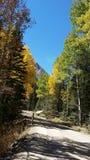 Tremule di Colorado sulla vecchia strada di cadute fotografia stock