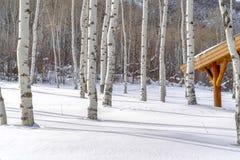 Tremule di tremito e neve soleggiata ad una stazione sciistica fotografie stock libere da diritti