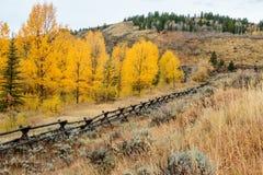 Tremule dorate ed arancio del Wyoming Immagine Stock Libera da Diritti