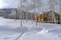 Tremule e cabina di tremito sulla montagna nevosa nell'Utah fotografia stock