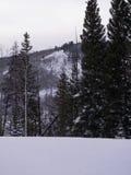 Tremule e pini con priorità alta nevosa Immagini Stock