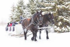Trenó Cavalo-Desenhado no inverno Imagens de Stock Royalty Free
