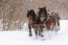 Trenó Cavalo-Desenhado no inverno Imagem de Stock
