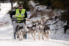 Trenó de cão que compete na Transilvânia Imagens de Stock Royalty Free