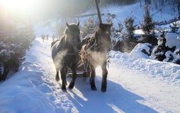 Trenó desenhado cavalo Imagem de Stock Royalty Free