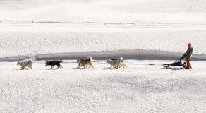 Trenó do cão com a equipe do cão do cão de puxar trenós e de esquimó fotografia de stock royalty free
