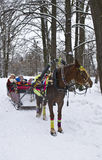 Trenó do cavalo no parque do inverno Imagens de Stock Royalty Free