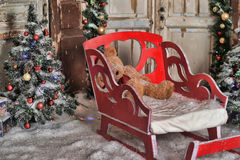 Trenó vermelho na árvore de Natal imagem de stock