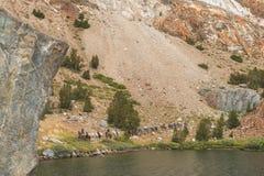 Tren de paquete de la mula en montañas Foto de archivo libre de regalías
