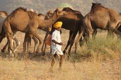 Tren del camello Imágenes de archivo libres de regalías