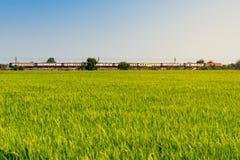 Tren y el campo del arroz Imagenes de archivo