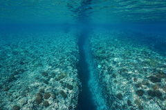 Trench carved by swell underwater Pacific ocean. Natural trench into the coral reef carved by wave swell, underwater landscape, Huahine island, Pacific ocean Royalty Free Stock Photography
