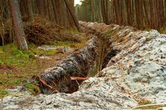 The trench in the pine forest, the groove for laying cable in the forest, the destruction of the environment. The groove for laying cable in the forest, the royalty free stock photo