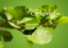 Trend color of the year 2017 Greenery background Royalty Free Stock Images