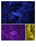 Glowing blue, yellow and purple leaves Pattern Beautiful Tropical royalty free stock photos