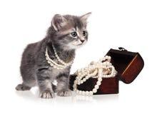 Trendig kattunge Fotografering för Bildbyråer