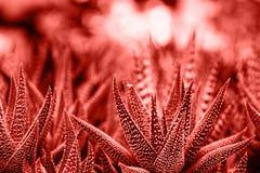 Trendu pojęcia kolor roku 2019 Żywy koral obraz royalty free