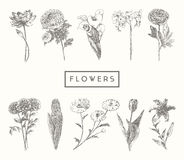 Trendy collection hand drawn flowers floral set Stock Image