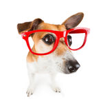 Trendy cute dog Royalty Free Stock Photography