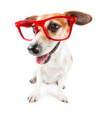 Trendy cute dog Stock Images