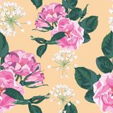 Trendy floral background with wild rose, rosa canina dog rose garden flowers. Hand drawn style on yellow backdrop Royalty Free Stock Photos