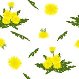 Trendy floral pattern of yellow dandelions flowers and green lea. Ves.Outline botanical elements scattered random.Seamless vector texture for fashion prints Royalty Free Stock Photo
