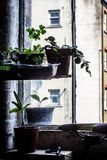 Trendy, hipster window in a hipster flat. With houseplants royalty free stock photos