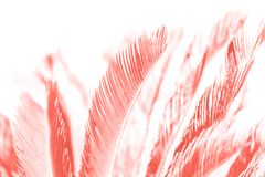 Hemp palm tree leaves in living coral color stock photos