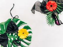 Trendy minimal summer concept. Sunglasses and bikini over tropical leaf monstera stock image