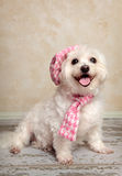 Trendy pooch Stock Photo