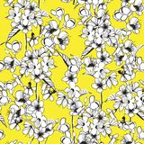 Trendy seamless cherry blossom outline monotone flowers with viv Royalty Free Stock Image