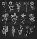 Trendy set hand drawn flowers on chalkboard Royalty Free Stock Photography
