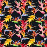 Trendy simple floral pattern. Flowers of calathea, strelitzia. Tropical jungle print. Repeating background for textile royalty free stock photography