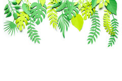 Trendy Summer Tropical Leaves. Background Trendy Summer green Tropical Leaves on green Stock Photo