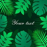 Trendy Summer Tropical Leaves Vector illustration background Design. Trendy Summer Tropical Leaves Vector Design background royalty free illustration