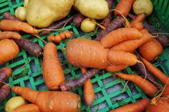 Trendy ugly misshapen root vegetable. (carrots and potatoes) at a French farmers market Stock Image