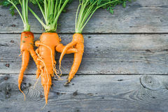 Trendy ugly organic  carrot Royalty Free Stock Image