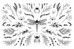 Free Trendy Vector Insects And Floral Branches Line Drawings. Black Silhouette Elements. Wild Leaves And Greenery Illustrations. Bugs Royalty Free Stock Photo - 193413995